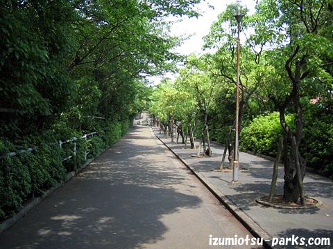 小松緑道 小松町の市民会館と泉大津大橋を結ぶ、約1kmの散歩道とサイクリング道で... 小松緑道